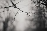 What Do You See Fotografie-Druck von Laura Evans