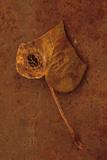 Høstbrun Fotografisk trykk av Den Reader