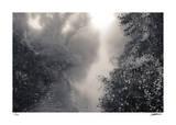 Cottonwood Slough Giclée-tryk af Donald Satterlee