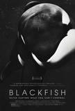 Blackfish Movie Poster マスタープリント