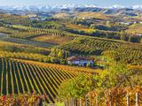 Vineyards, Nr Alba, Langhe, Piedmont (or Piemonte or Piedmonte), Italy Fotografie-Druck von Peter Adams