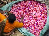 Flower Market, Kolkata (Calcutta), India Fotografie-Druck von Peter Adams