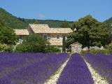 Lavender Near Banon, Provence, Provence-Alpes-Cote D'Azur, France Fotografisk tryk af Katja Kreder