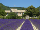 Lavender Near Banon, Provence, Provence-Alpes-Cote D'Azur, France Photographic Print by Katja Kreder
