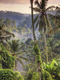 Indonesia, Bali, Ubud, Landscape Around the Campuhan Ridge Walk Fotografisk tryk af Michele Falzone