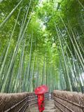 Japan, Kyoto, Arashiyama, Adashino Nembutsu-ji Temple, Bamboo Forest Fotografisk trykk av Steve Vidler