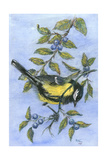Tit in Blackthorn and Sloe Giclee Print by Nell Hill