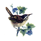 Wren in the Ivy Giclee Print by Nell Hill