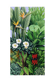 Foliage II, 2005 Giclee Print by Catherine Abel