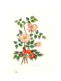 Dog Rose, 1980 Giclee Print by Nell Hill