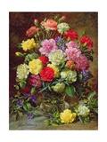 Carnations of Radiant Colours Reproduction procédé giclée par Albert Williams