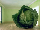 Cabbage (After Magritte) 1995 Photographic Print by Norman Hollands