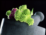 Romanescu in Granite Pestle and Mortar, 2001 Photographic Print by Norman Hollands