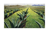 Maguey Plants with Cloudy Sky, 1999 Stampa giclée di Pedro Diego Alvarado