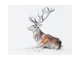 Seated Stag, 2006 Giclee Print by Mark Adlington