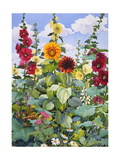 Hollyhocks and Sunflowers, 2005 Giclee Print by Christopher Ryland