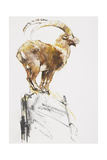 Stambecco d'Oro, 2005 Giclée-tryk af Mark Adlington