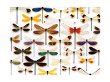 Damselfly Mosaic Photographic Print by Christopher Marley