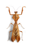 Mantis 3 Photographic Print by Christopher Marley