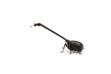 Giraffe Weevil Photographic Print by Christopher Marley