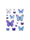 Cerulean Butterflies Photographic Print by Christopher Marley