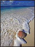 Scallop Shell in the Surf Framed Canvas Print by Martin Harvey