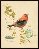 Gilded Songbird 3 Framed Canvas Print by Chad Barrett