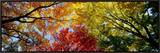 Colorful Trees in Fall, Autumn, Low Angle View Framed Canvas Print