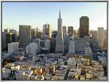 Transamerica Pyramid Building and Downtown from Top of Coit Tower Framed Canvas Print by Emily Riddell