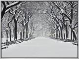 Central Park in Winter Framed Canvas Print by Rudy Sulgan