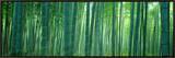 Bamboo Forest, Sagano, Kyoto, Japan Impressão em tela emoldurada