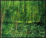 Floresta e matagal, cerca de 1887 Impressão em tela emoldurada por Vincent van Gogh