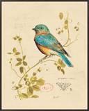 Gilded Songbird 4 Framed Canvas Print by Chad Barrett