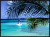 Palm Tree, Swimmers and a Boat at the Beach, Waikiki, U.S.A. Impressão em tela emoldurada por Ann Cecil