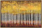 Golden Aspens Framed Canvas Print by Robert Holman