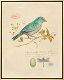 Gilded Songbird 1 Framed Canvas Print by Chad Barrett