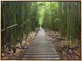 Boardwalk Trail Through a Bamboo Forest on Maui, Hawaii, USA Impressão em tela emoldurada por Patrick Smith