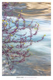 Redbud, Merced River Canyon Prints by William Neill