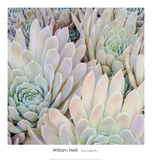 Succulents I Art by William Neill