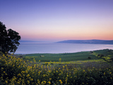Sea of Galilee, Israel Stampa su metallo di Jon Arnold