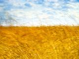 Golden Grass in the Wind Metal Print by Robert Cattan