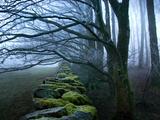 Moss Covered Stone Wall and Trees in Dense Fog Metalltrykk av Tommy Martin