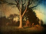 Memories of a Tree Metal Print by Robert Cattan
