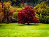 The Red Tree Metal Print by Jody Miller
