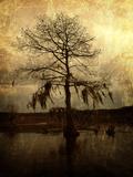 Cypress Kunst op metaal van Lydia Marano