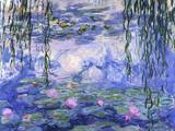 Nenúfar Pôsteres por Claude Monet