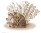 Seashells II Art