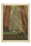 Redwood Prints by  Anderson Design Group