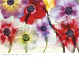 Vibrance Posters by Harold Davis