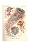 Discomedusae - Scheibenquallen, Pl. 8 from 'Kunstformen Der Natur', Engraved by Adolf Giltsch,… Reproduction procédé giclée par Ernst Haeckel